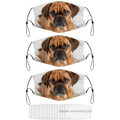 Dark Fawn Puggle Dog Laying Washable Animal Face Mask for Adult with 15 Filters at  Men's Clothing store
